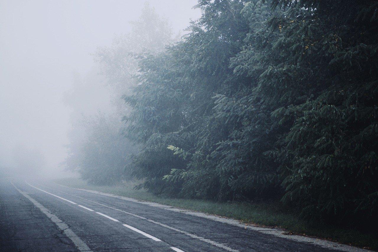 fog, nature, road-6696312.jpg